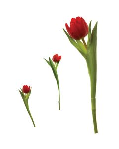 Tulips Wall Stickers by RoomMates